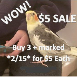 $5 each SALE! 3 or more items marked *2/15*